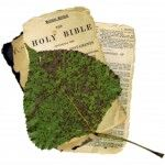 bible-and-leaf-1400814-m